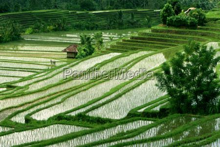 the, rice, terraces, of, bali - 560618