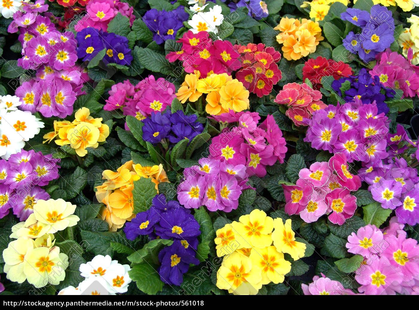 multicolored, carpet - 561018