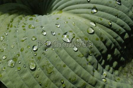 leaf landscape 1