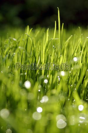 grass, dew, drops - 566634