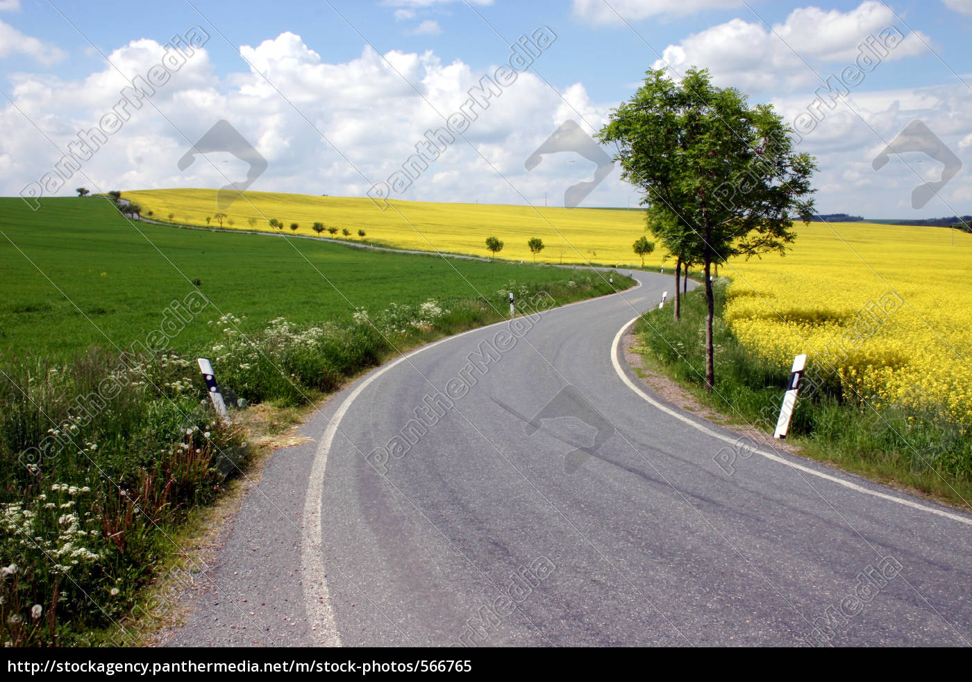 road, rape, field, landscape - 566765