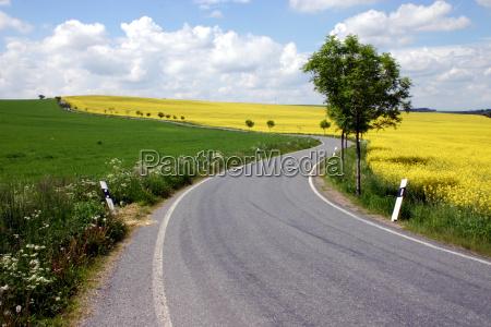 road, rape, field, landscape - 566765