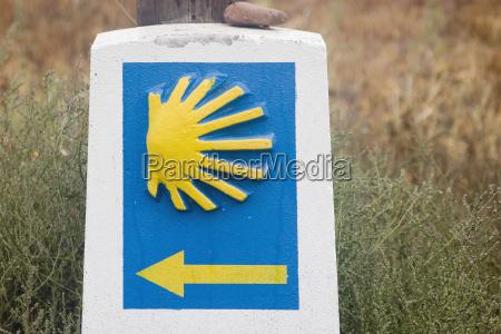 symbol, of, pilgrimage, the, scallop - 568320