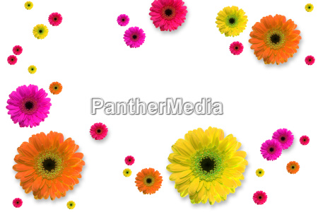 flowers - 569887