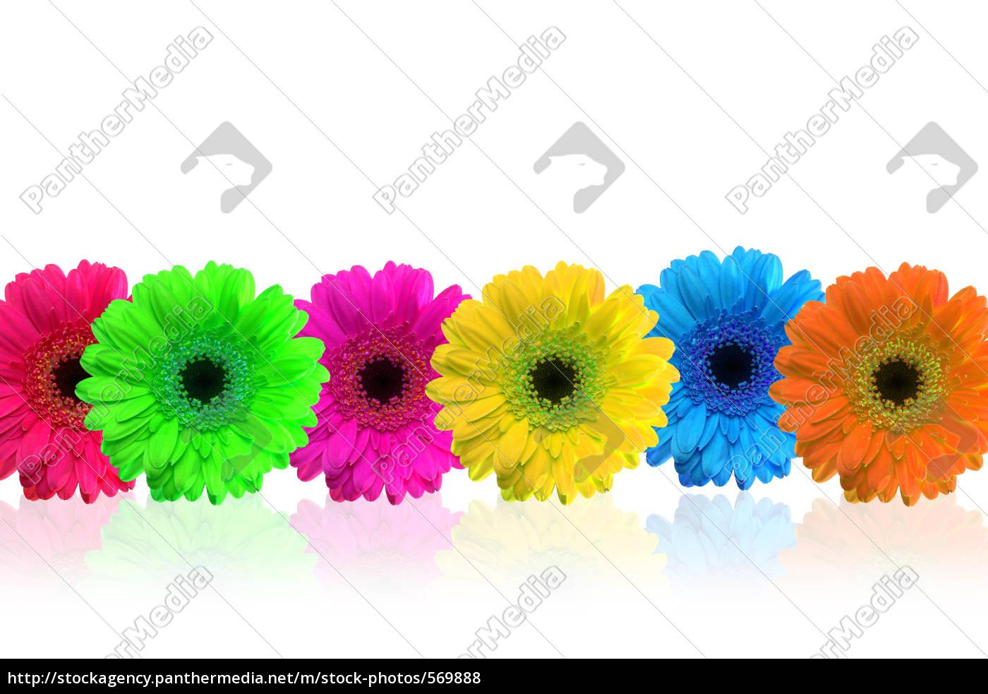 flowers - 569888