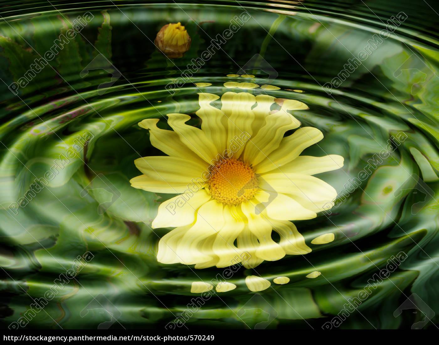 water, flora, -, flowers, -, wasserspiegelung - 570249