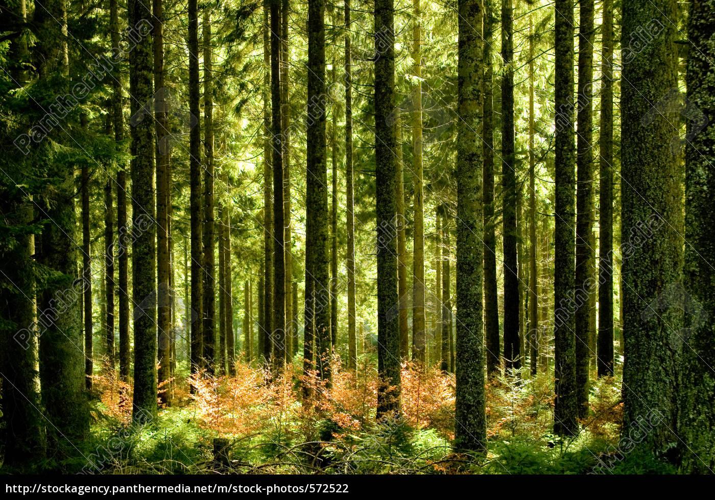 sparse, woods - 572522