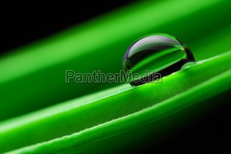 water, pearl, on, leaf, crocus - 573938