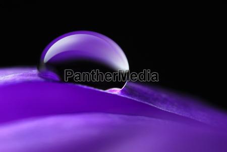 water, pearl, on, leaf, crocus - 575736