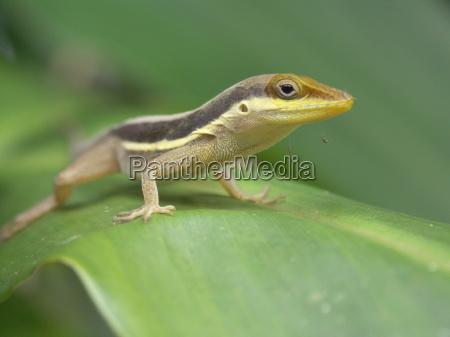 lizard - 576393