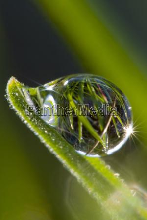 dew, drops, macro - 577975