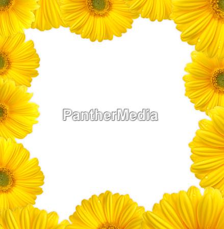 flowers, frame - 578543