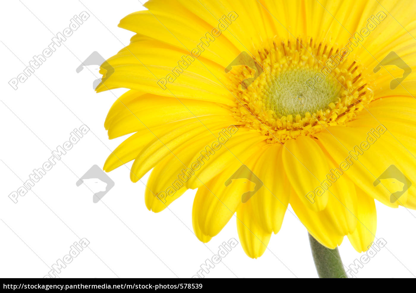 springtime - 578539