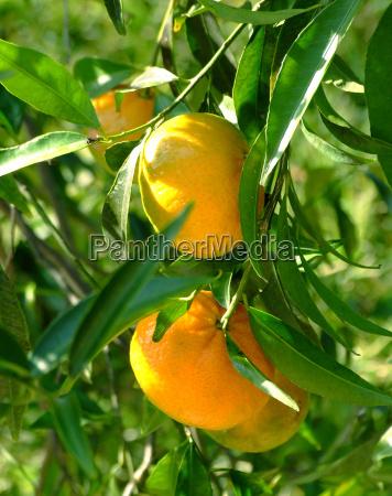 mandarin 2