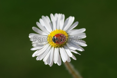 ladybug, v - 580798