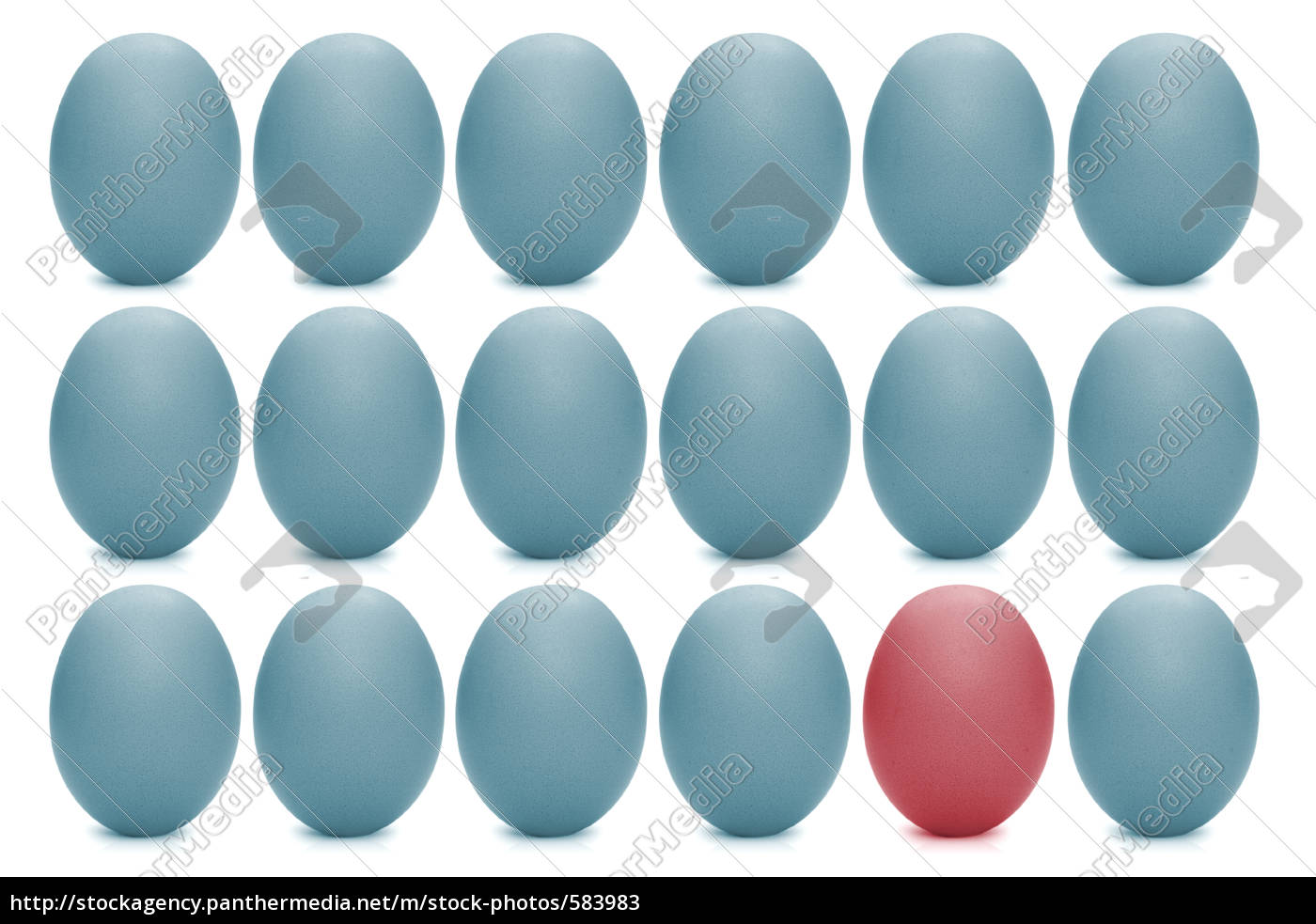 eggs - 583983