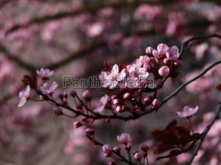 spring, lights - 584560