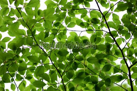 leaves, i - 586663