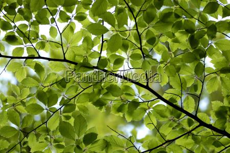 leaves, ii - 586668