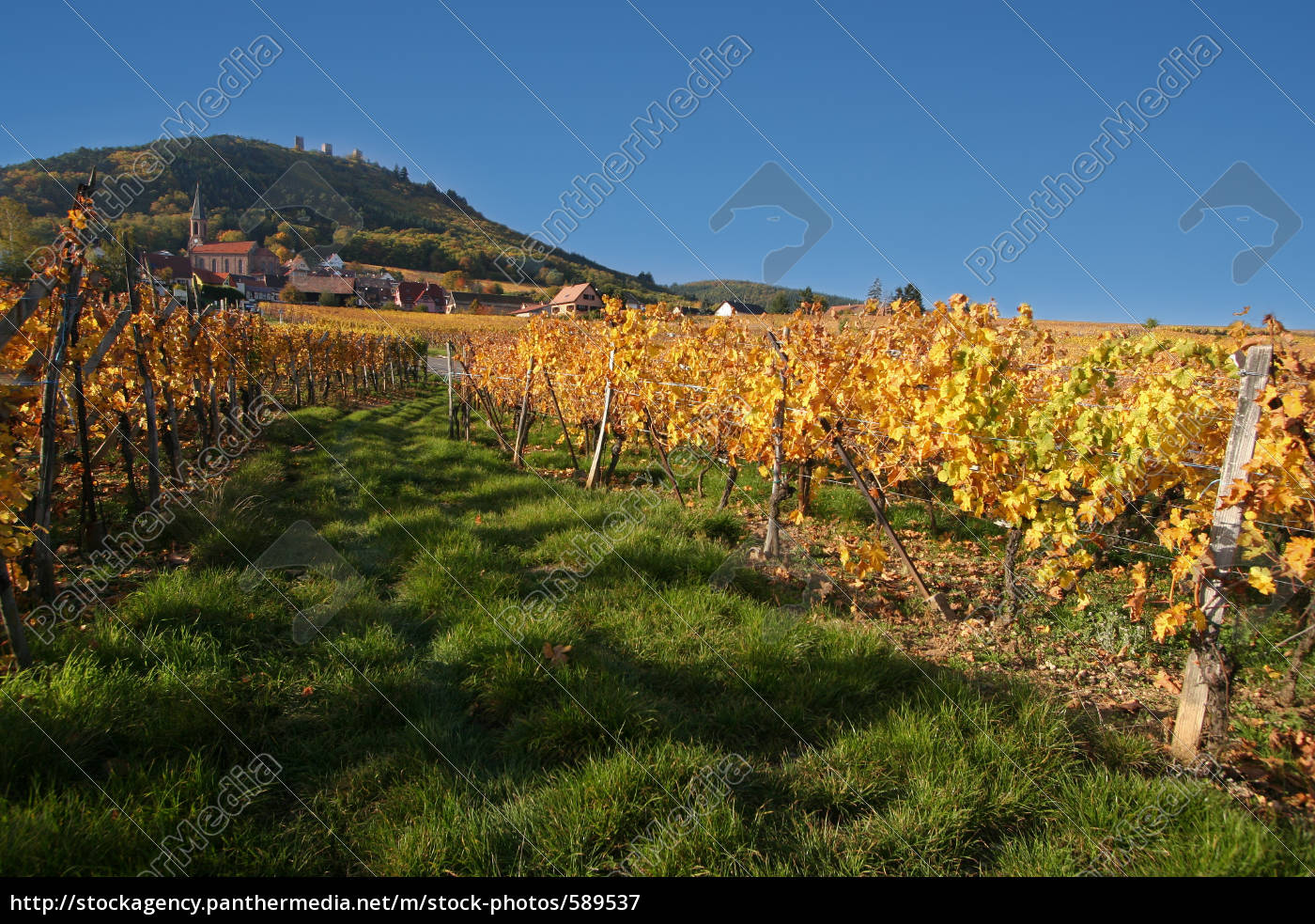 vineyards, in, autumn - 589537