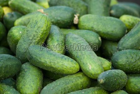 cucumbers - 593449