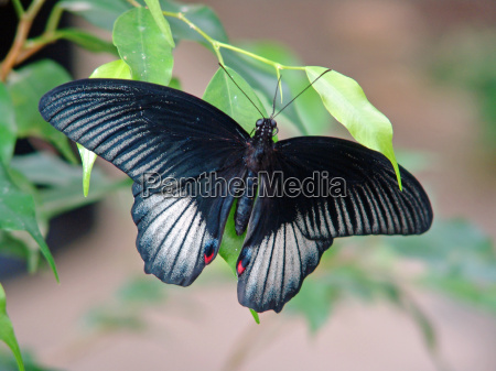 tropical, butterfly - 593743