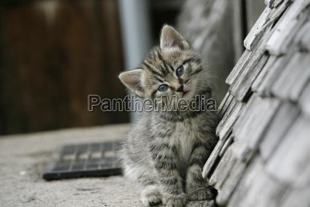 kitten - 594040