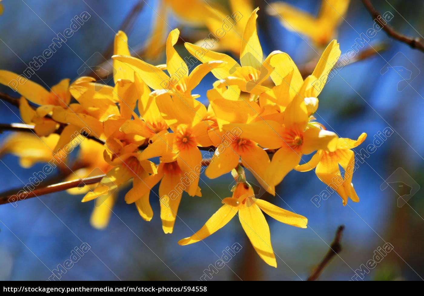 spring - 594558