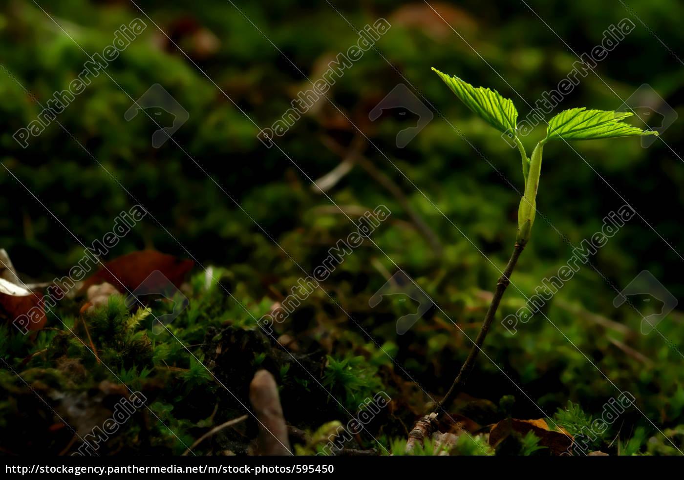delicate, nature - 595450