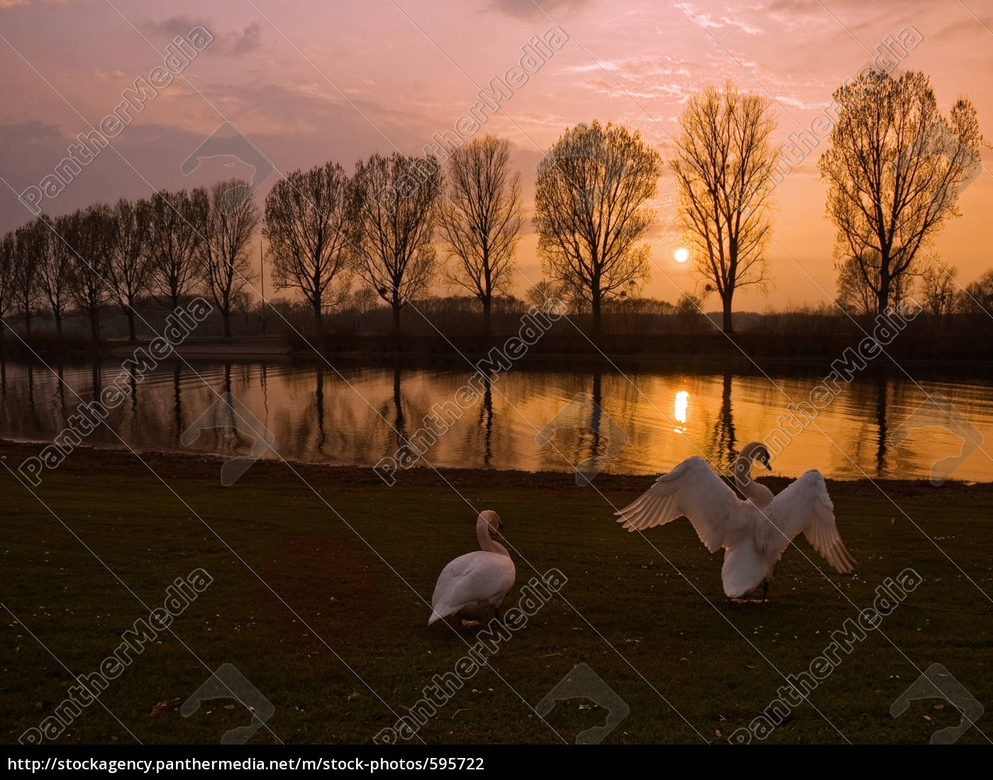 sun, swans - 595722