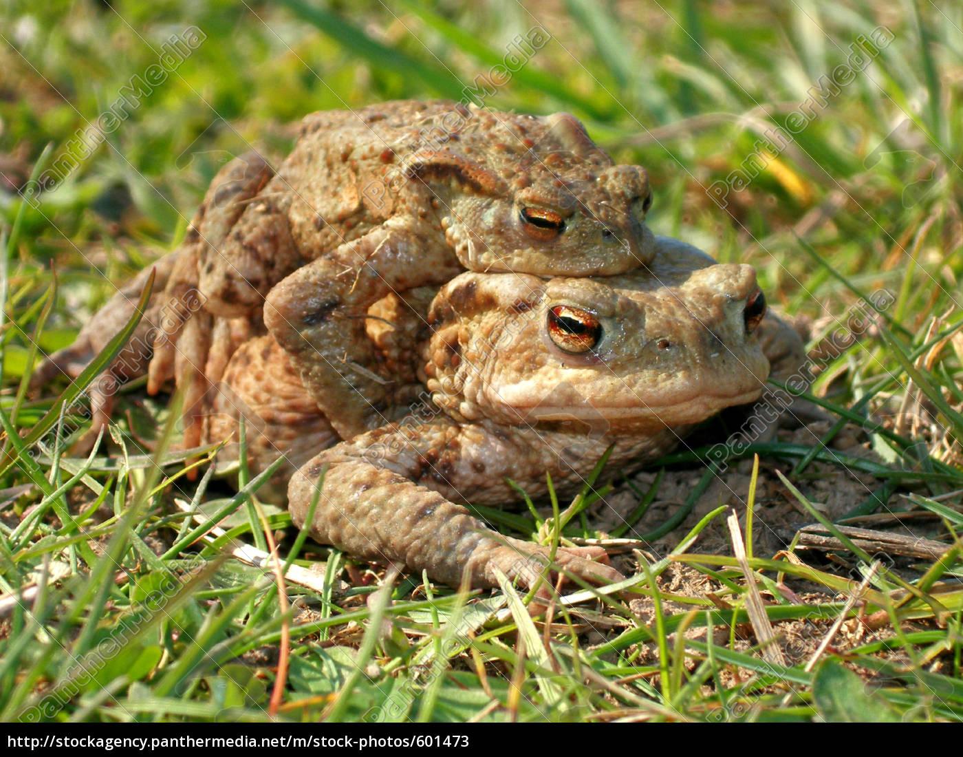 toads, -, hike - 601473