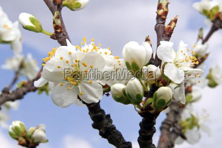spring - 602525