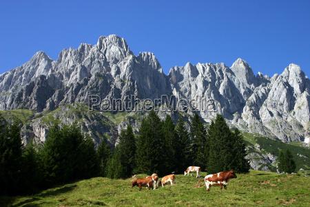 pastures under hochkoenig