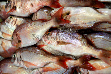 sea, bream, at, fish, market - 605400