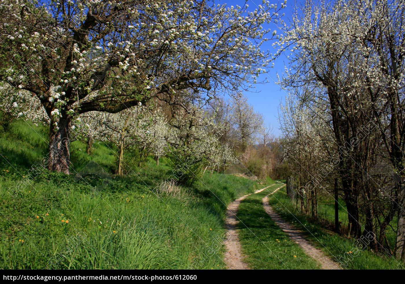 spring - 612060