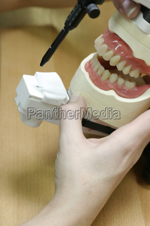 dental, models, upper, and, lower, jaws - 614145