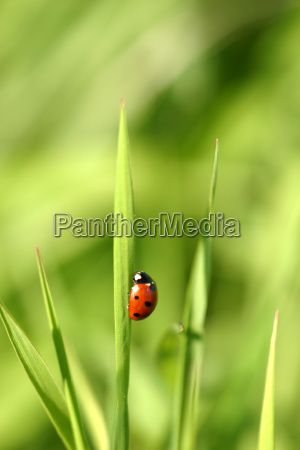 ladybird - 614814