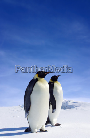 penguins - 618706