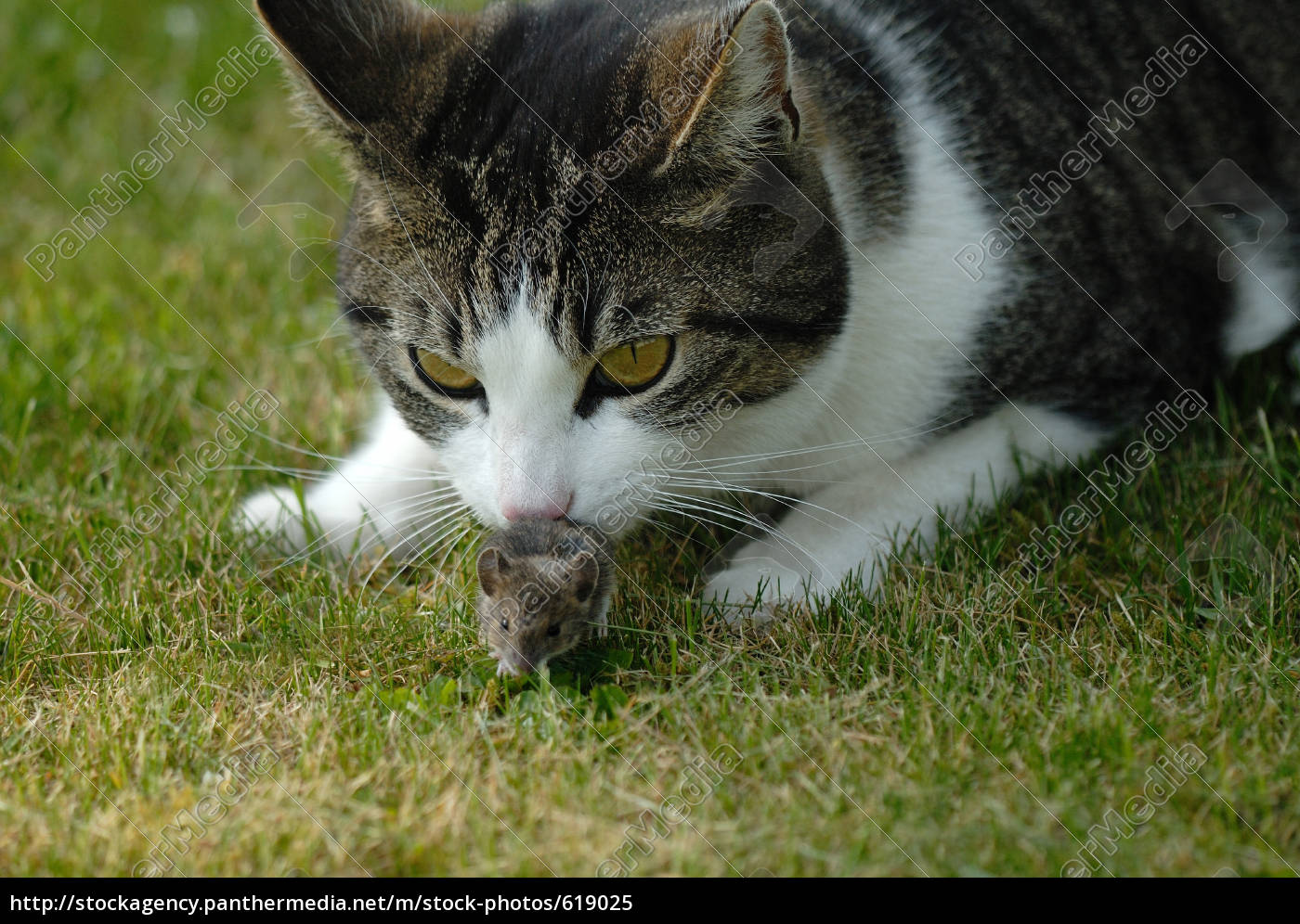 cat, and, mouse - 619025