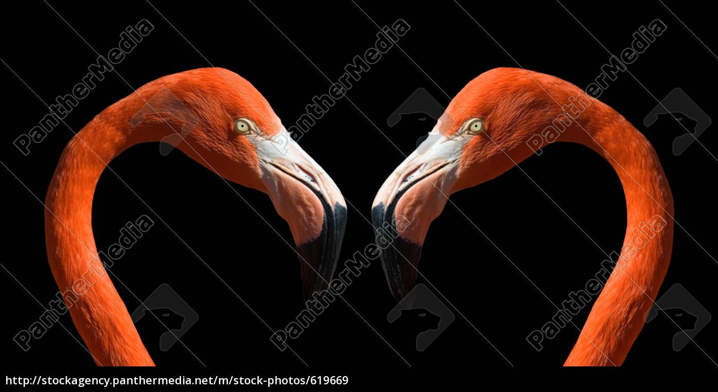 romantic, flamingos - 619669