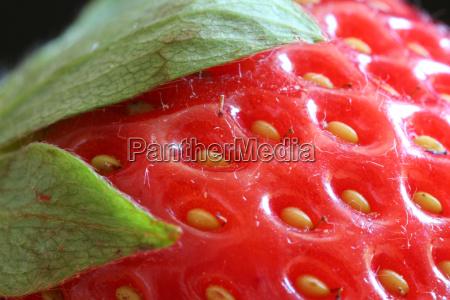 strawberry, red - 622971