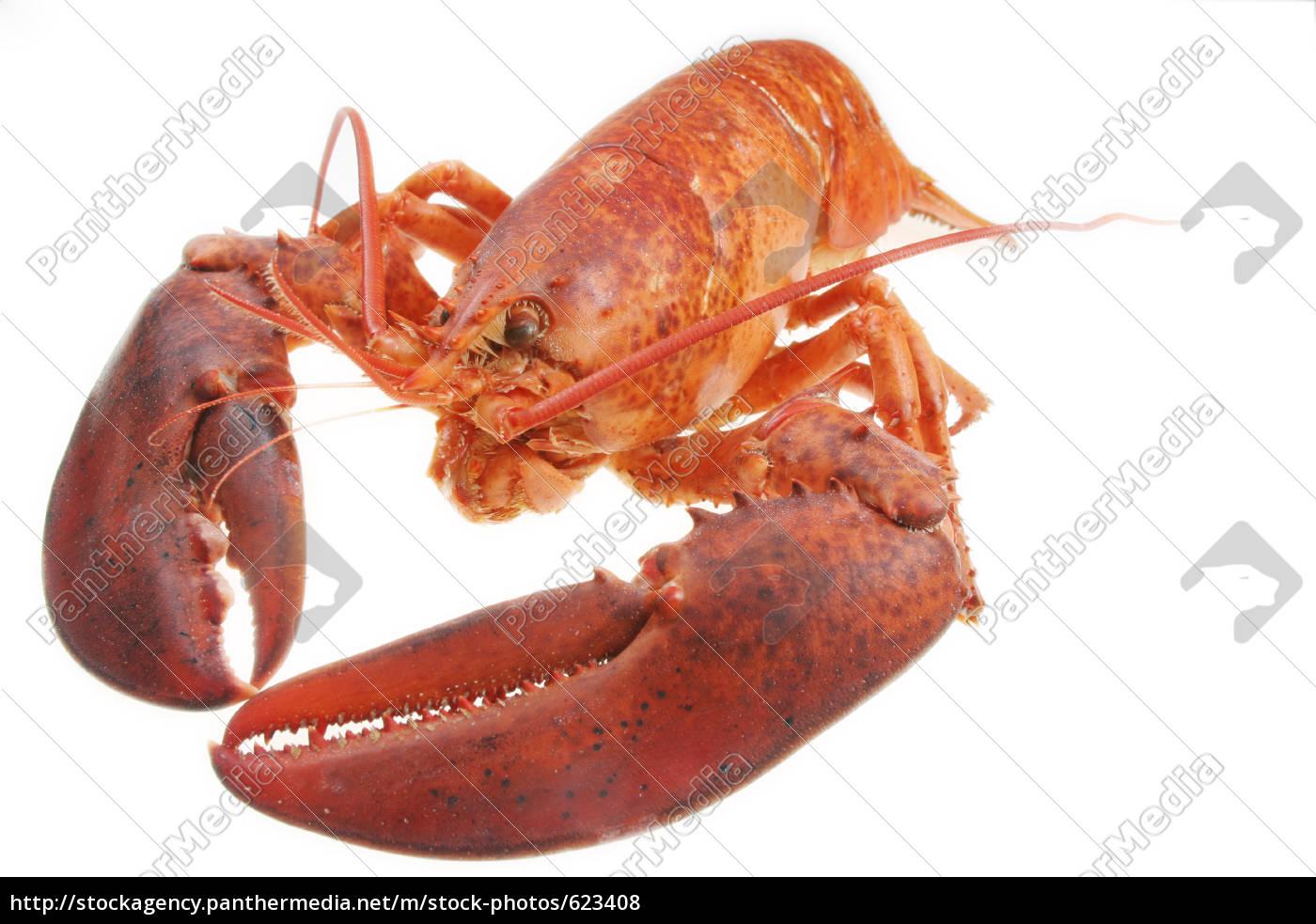 lobster - 623408