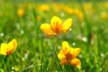 spring, flowers - 624909