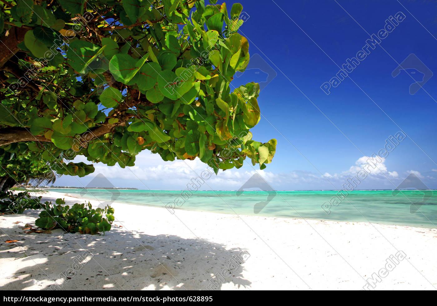 pure, caribbean - 628895