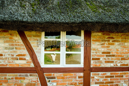 windows in half timbered