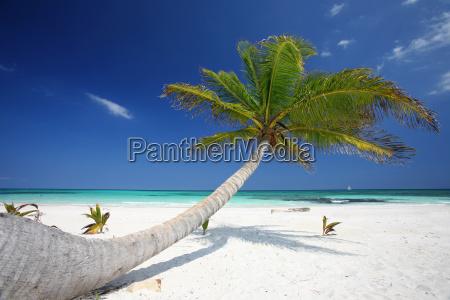 caribbean, dreams - 629642