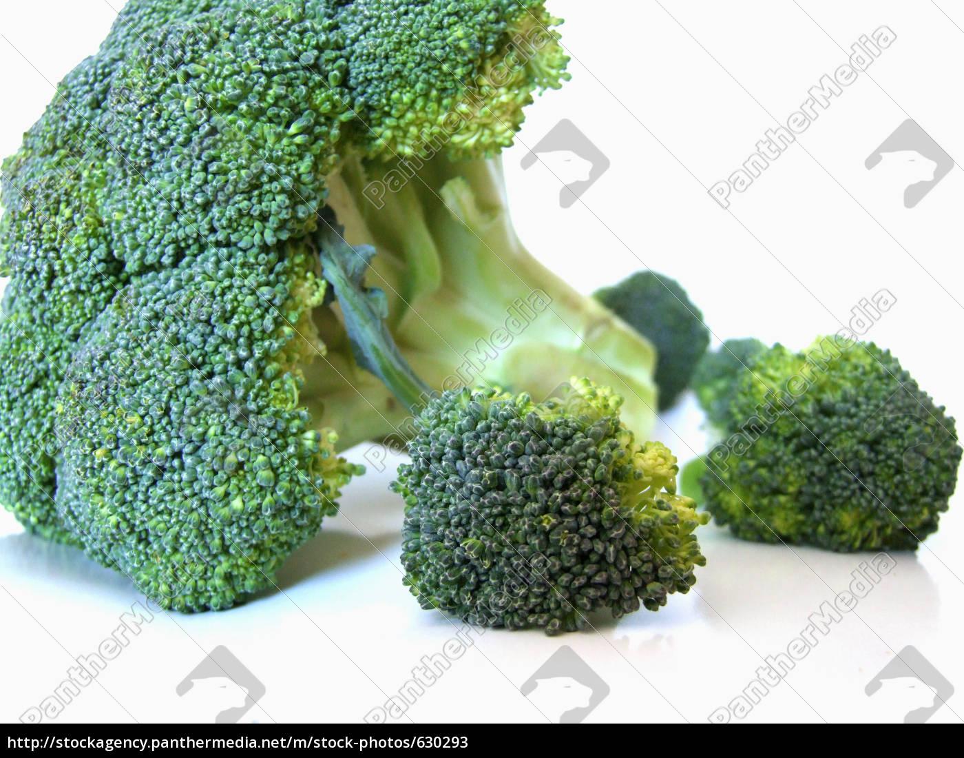 broccoli - 630293