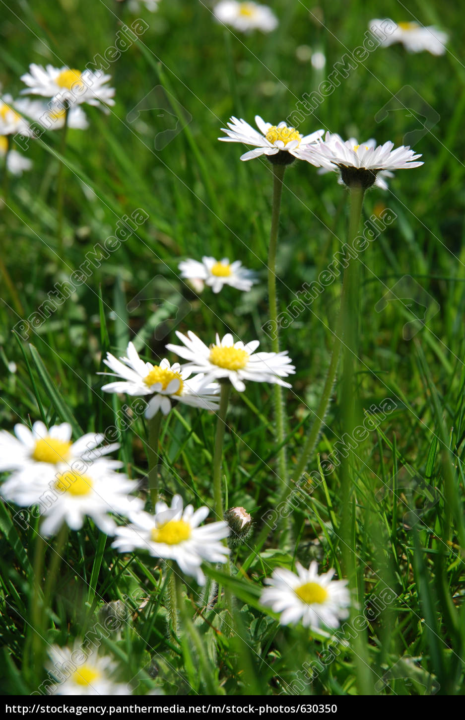 spring, meadow - 630350
