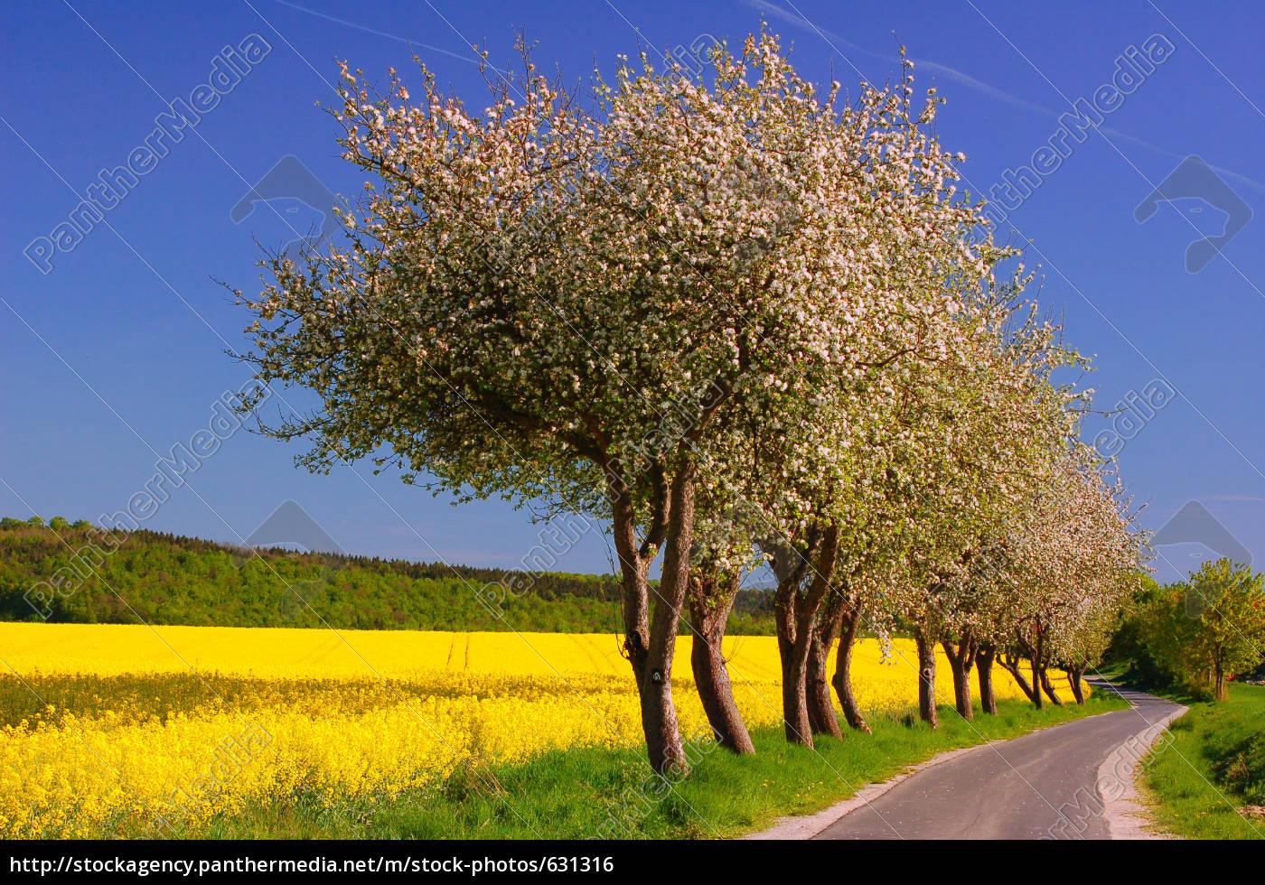 apple, trees, in, front, of, rape - 631316