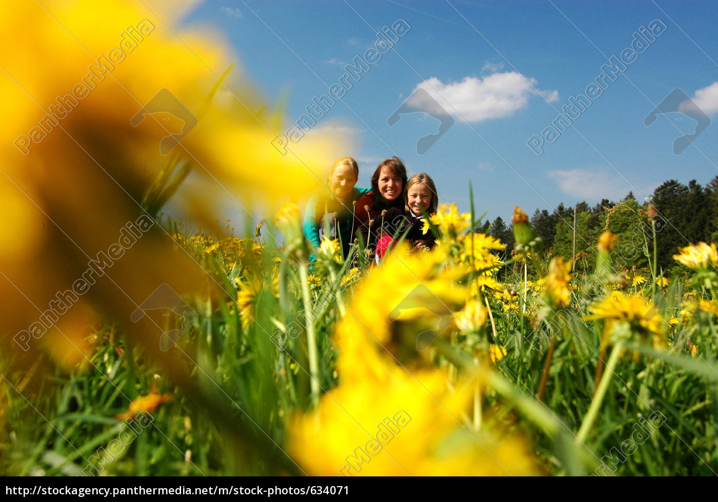 family, on, the, meadow - 634071